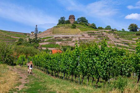Vineyard in Radebeul