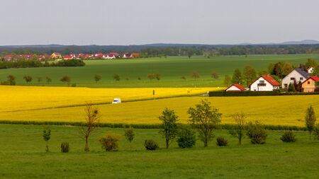 Fields with rapeseed