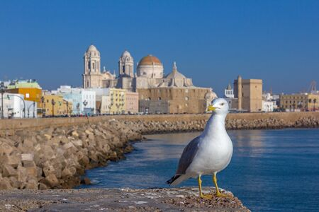Seagull in front of the cathedral in Cadiz Standard-Bild