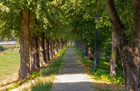 Avenue of trees on the embankment