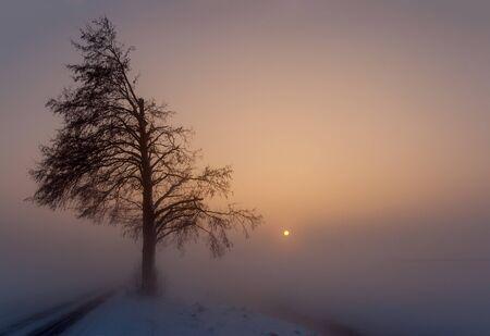 Fog in winter
