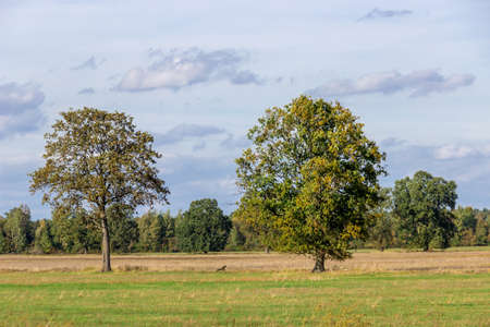 Fields in Brandenburg Standard-Bild