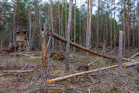 Storm damage in the forest, broken trees