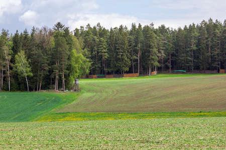 Forest meadow in Vogtland Standard-Bild