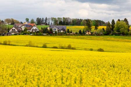 Houses in a rape field