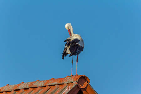 The stork on the roof