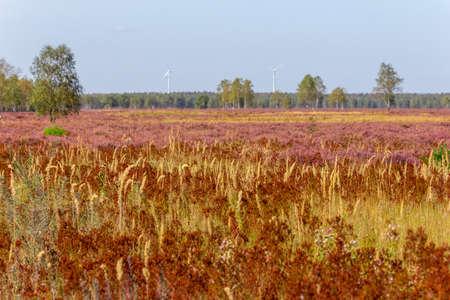 Heide nature reserve in Brandenburg Standard-Bild