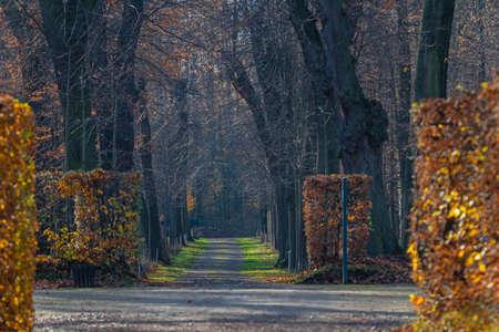 path in the dark forest