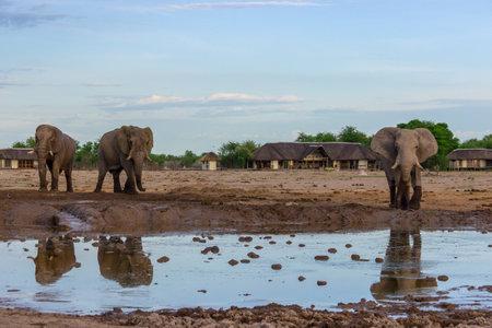 Elephants at a water hole Standard-Bild