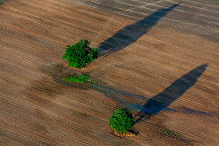 Two trees in a meadow seen from above