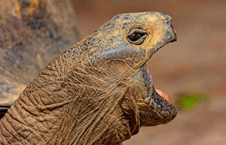 a turtle tears open its mouth Standard-Bild