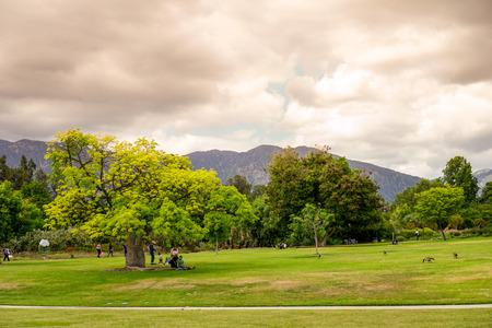 the arboretum: cloudy day at Arcadia Arboretum
