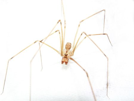 Close shot spider on white background Stock Photo - 3653796