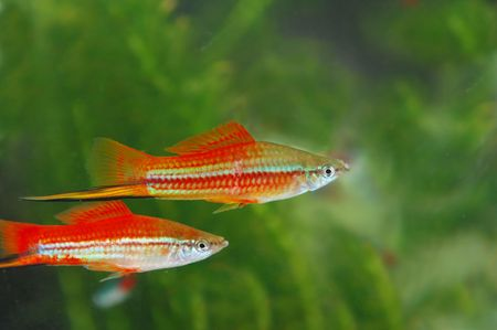 Tropical fish in an aquarium whit water on background Stock Photo - 3708794