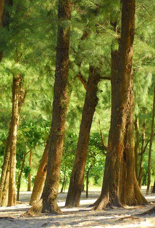sun shining through trees. Stock Photo - 11398994