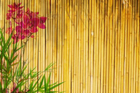 bamboo stick: Fresh orchids with bamboo background great for any project