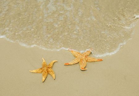 two seastars sitting on beach photo