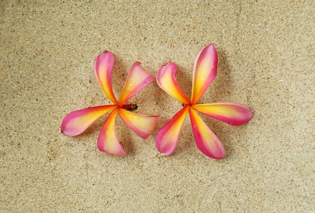 Pink Plumeria Flowers on the tree Stock Photo - 7658658