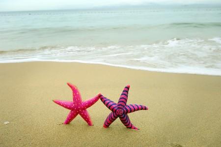 starfish on reef Stock Photo - 7660718