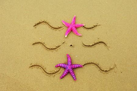starfish on the beach, vacation memories Stock Photo - 7658664