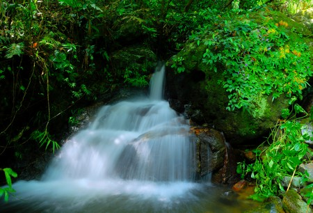 Green Forest and River Stock Photo - 7550899