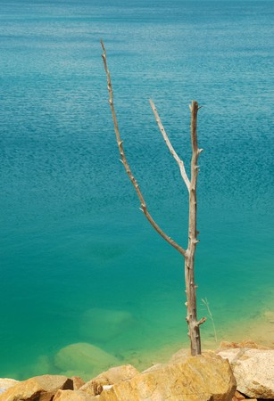 Dead tree in water photo