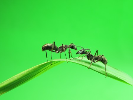 ants on a green grass Stock Photo - 7796636