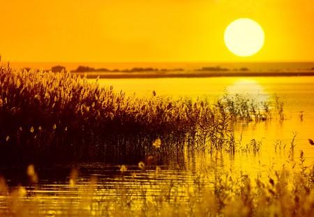 marsh plant: Reed gambi nella palude contro la luce del sole.  Archivio Fotografico