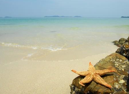 seastar: seastar sitting on beach