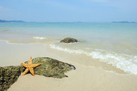 seastar sitting on beach  photo