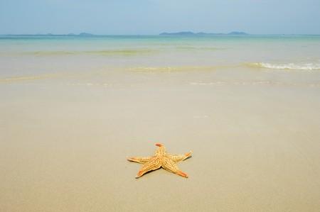 starfish photo