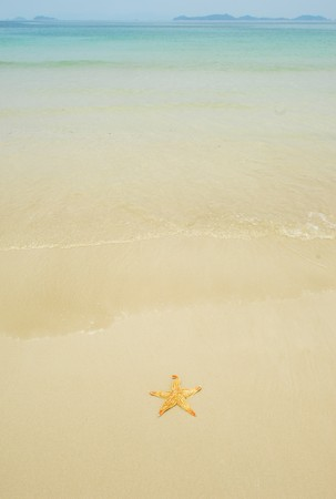 the gulf: seastar sitting on beach