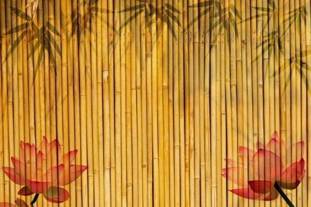 lotus and bamboo background photo