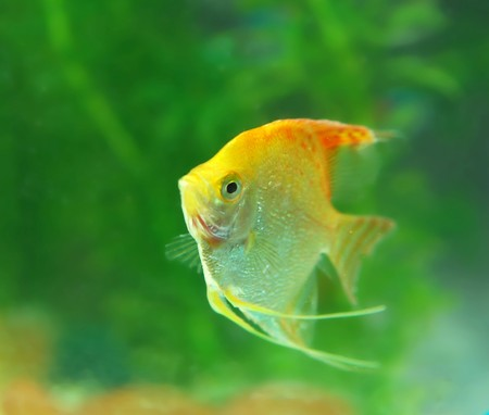 Tropical fish in an aquarium with water on background Stock Photo - 9912656