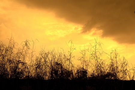 The bulrushes against sunlight over sky background in sunset.Look at my gallery for more sunset Stock Photo - 9301941