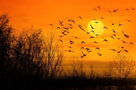 bulrushes against sunlight over sky background in sunset. photo