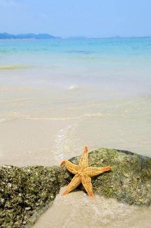 starfish sitting on beach photo