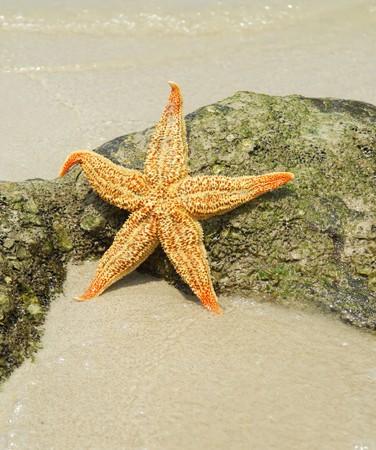 starfish sitting on beach more in my portfolio photo