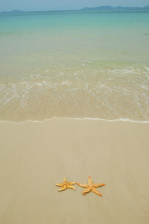 two seastars sitting on beach photo