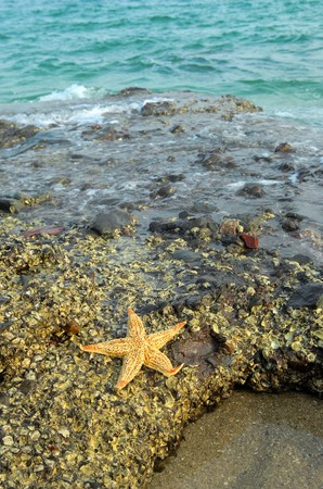 seastar sitting on beach photo