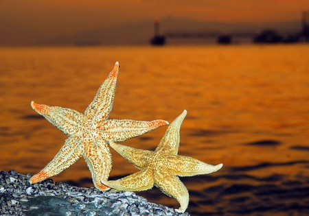starfish against sunlight  photo