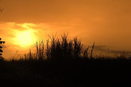 bulrushes: The bulrushes against sunlight over sky background