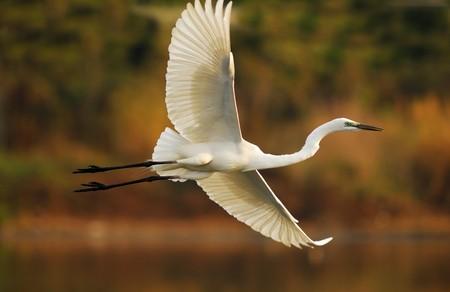 Egrets spielen bei waterland  Standard-Bild - 8147931