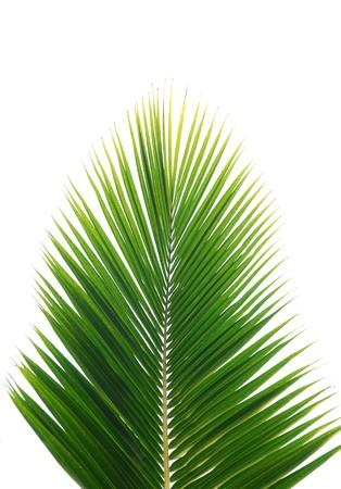 green palm leaf more in my portfolio  Stock Photo - 8969140