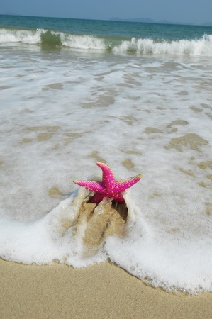 colorful seastar sitting on beach  Stock Photo - 8147612