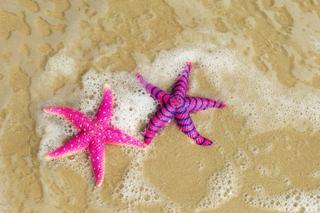 greece shoreline: two colorful starfish sitting on beach  Stock Photo