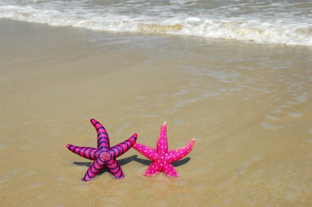 two colorful starfish sitting on beach  Stock Photo - 8146207