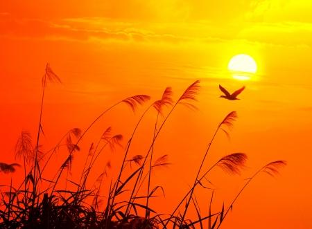 sunset with a flighting bird