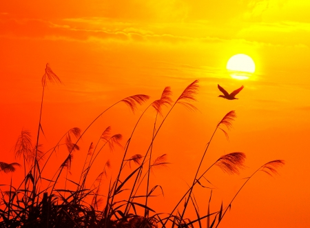migratory birds: sunset with a flighting bird