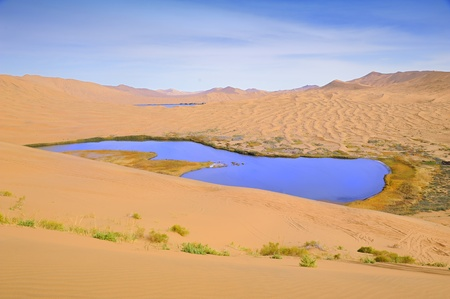 Dry plant in desert lake Stock Photo - 8310372